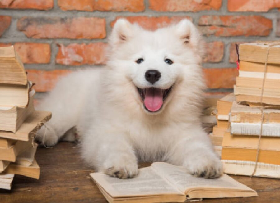 biella cani biblioteca accompagnano genitori