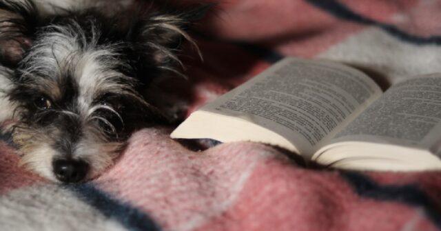 biella cani possono accompagnare proprietari biblioteca