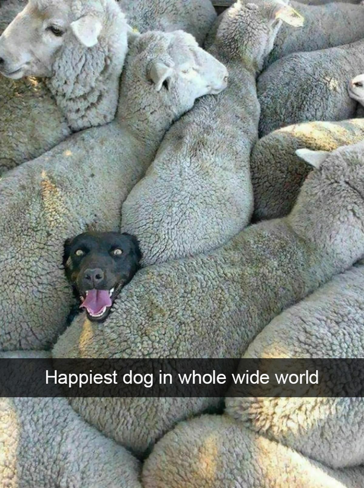 cane che ama il suo lavoro