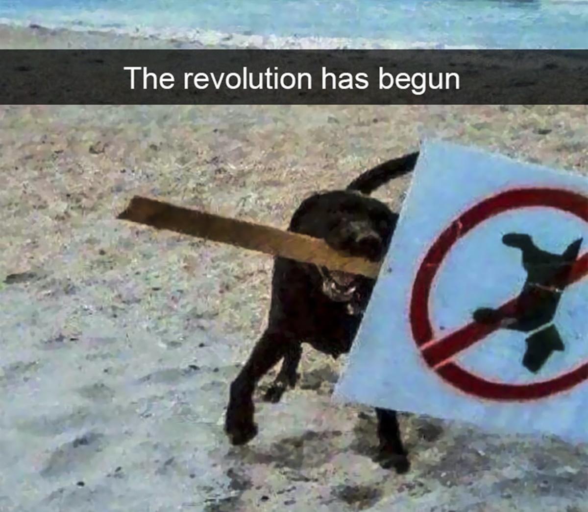 rivoluzione cani