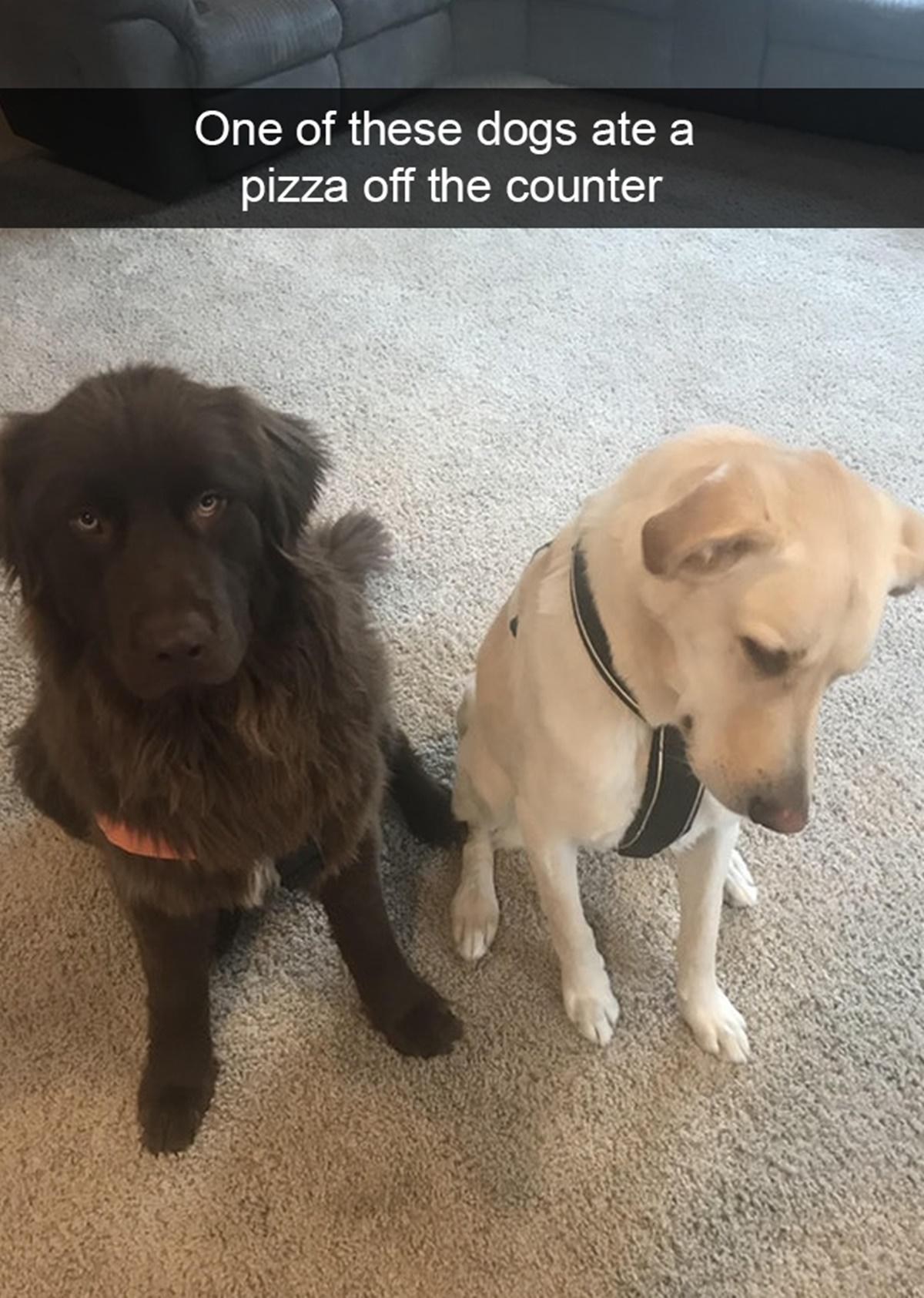 bravi ragazzi-colpevole