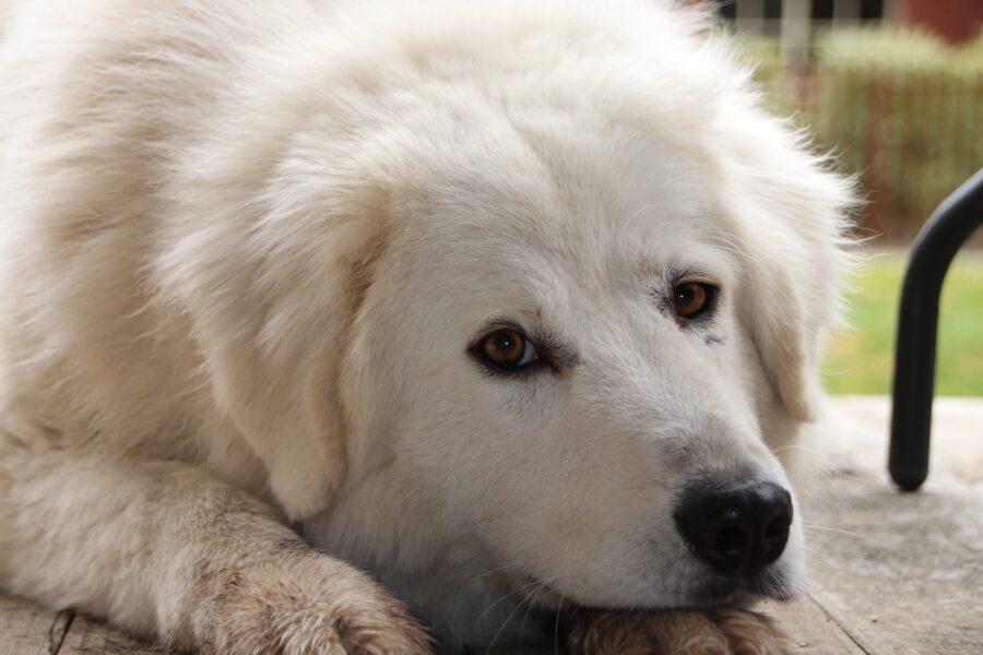 Cane in adozione
