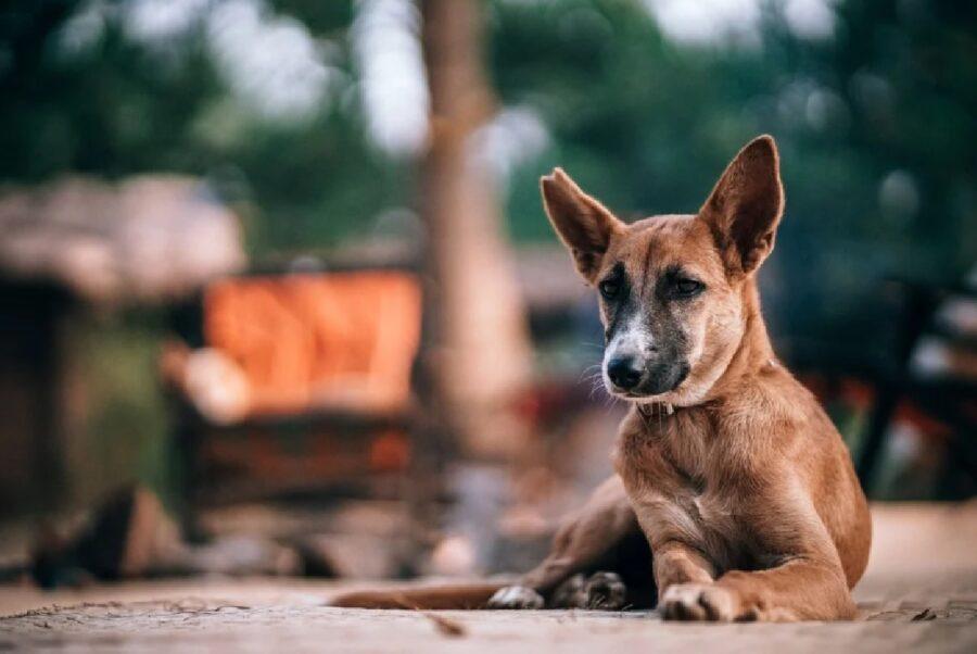 cane strada aspetta aiuto