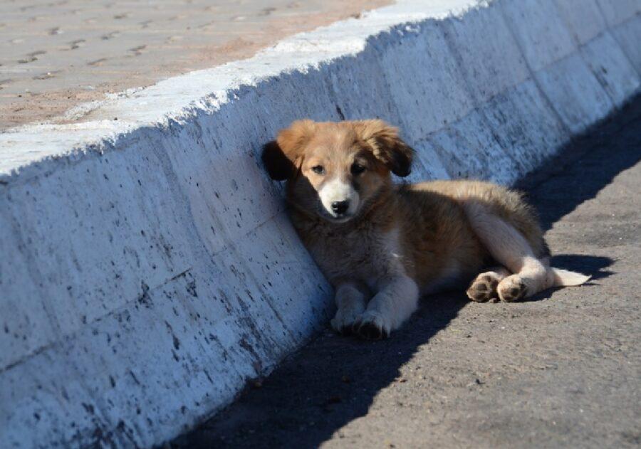 cane strada cerca soccorso