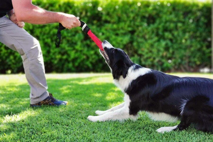 cane gioca al tiro alla fune