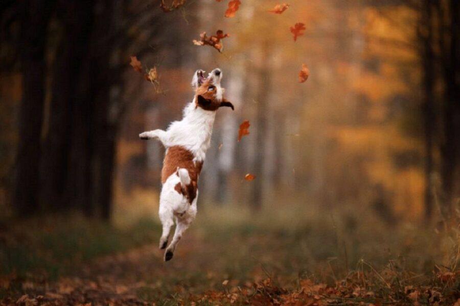 cane cerca di acchiappare le foglie