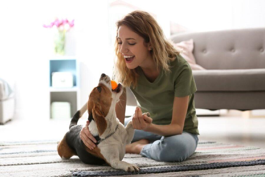 cane gioca con la padrona