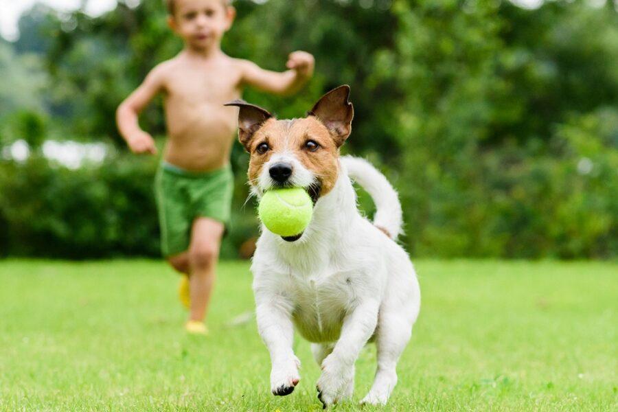cane che corre con pallina in bocca