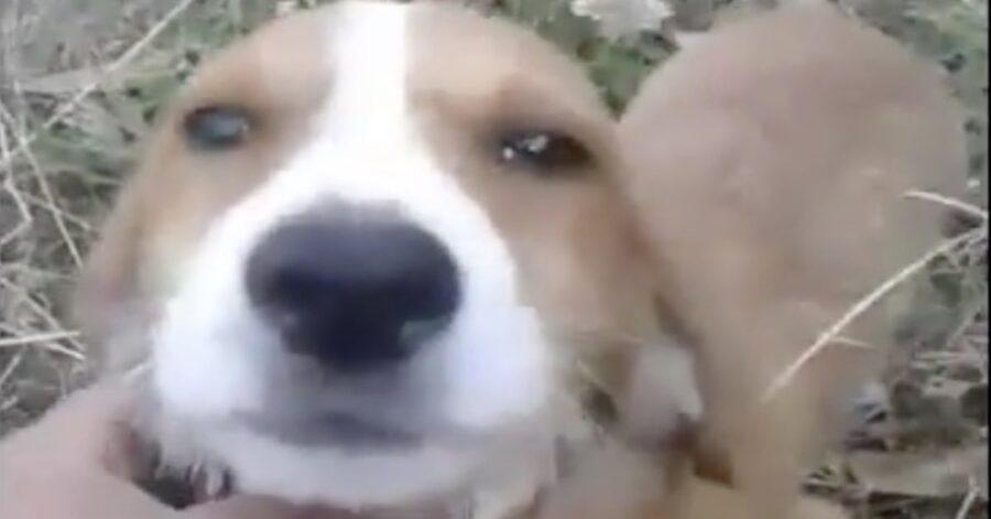 cane abbandonato primo piano