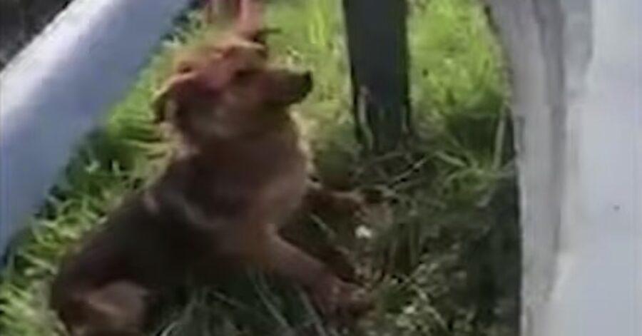 cagnolino spaventato solo in autostrada
