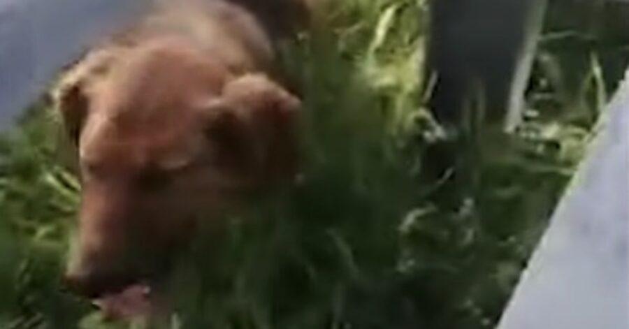 cagnolino decide di fidarsi del suo salvatore