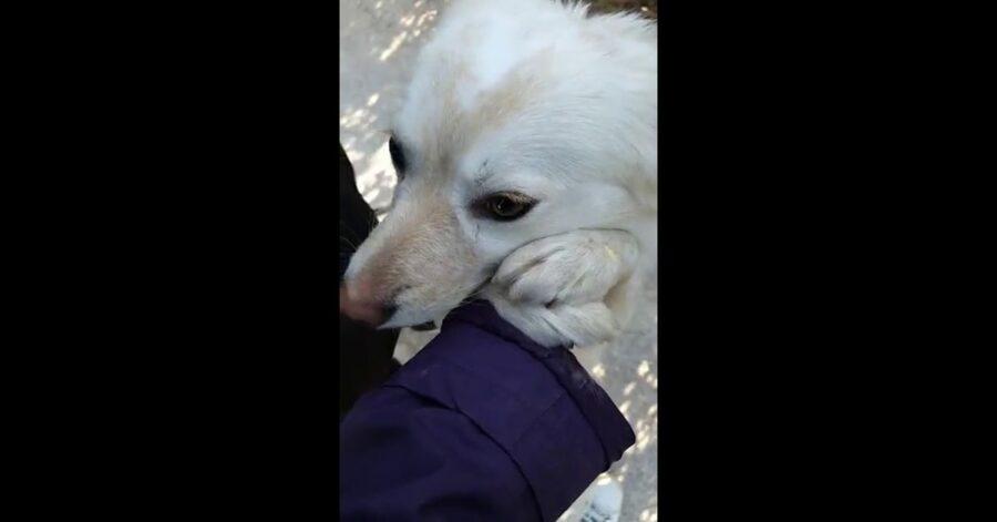 cane felice perchè adottato