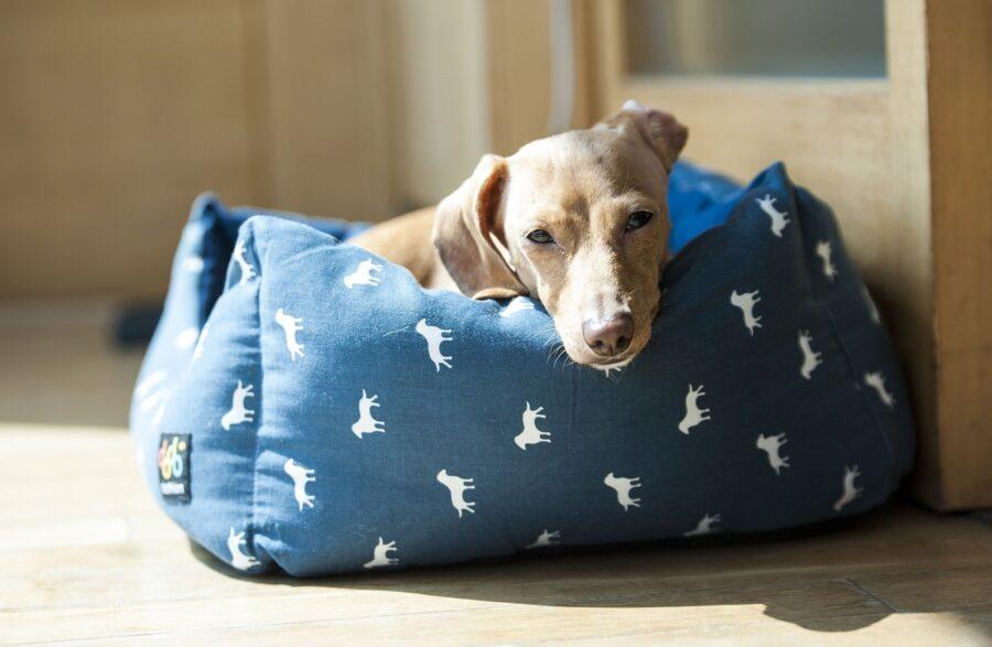 cane nella sua cuccia