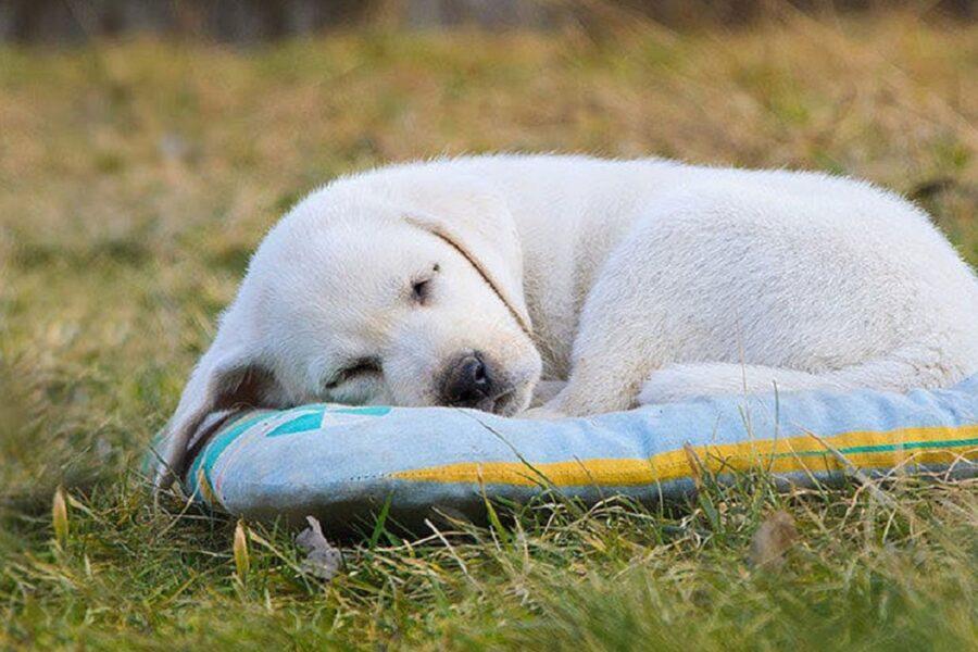 cane dorme fuori