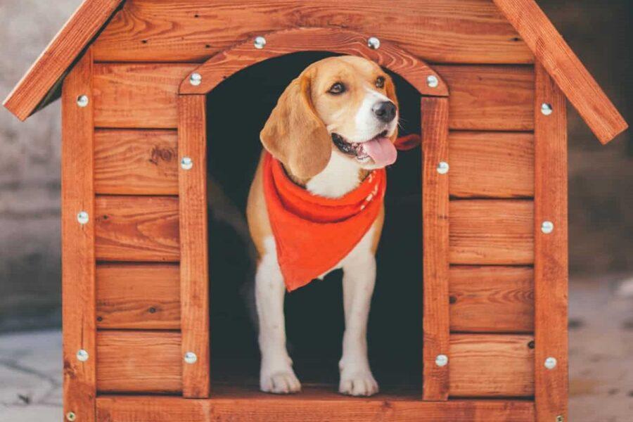 cane nella sua cuccia di legno