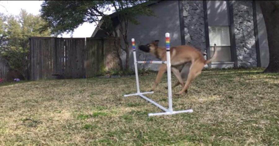 cane cade facendo un salto difficile