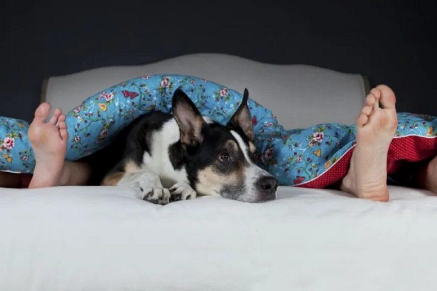 cane sul lettone in mezzo ai padroni