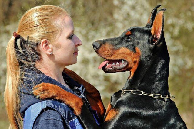 cane mette le zampe sulla padrona