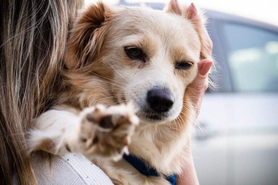 consolare il cane