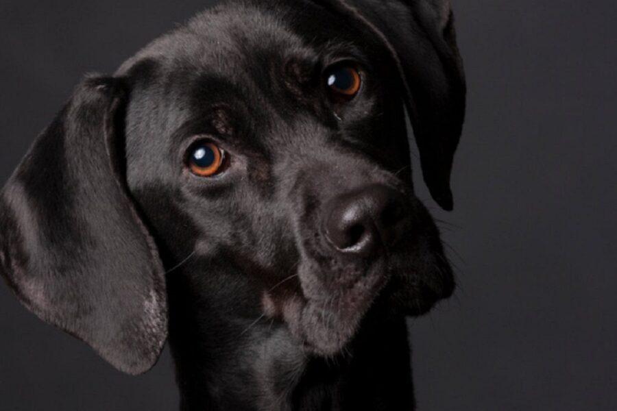 cane con la testa piegata