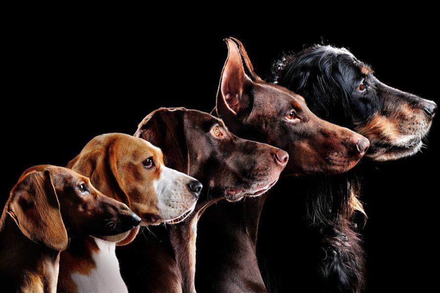 cani posizionati in scala