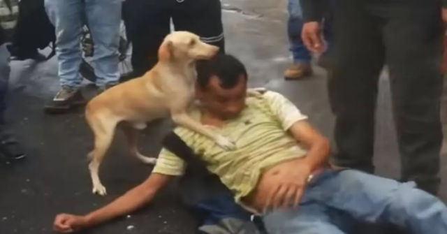 cane difende padrone disteso a terra
