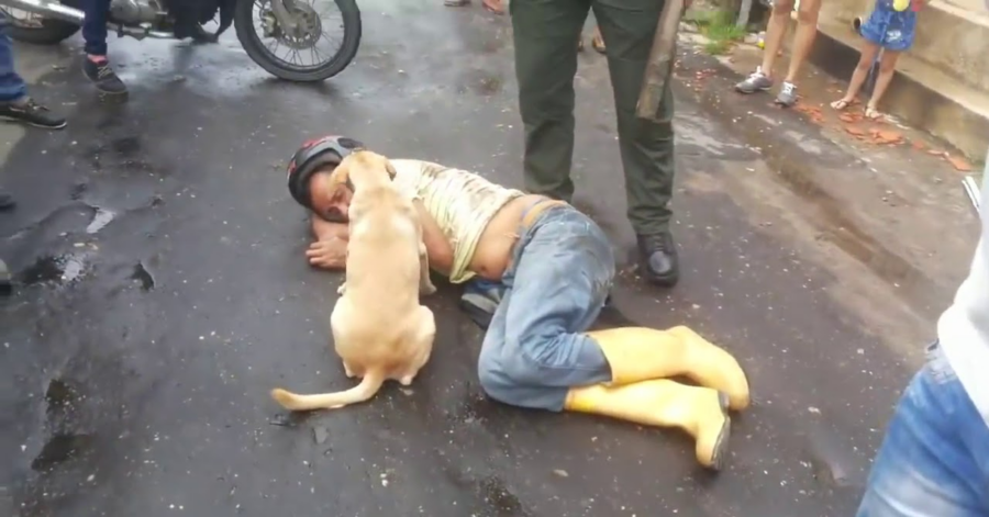 cane riverso sul padrone ubriaco