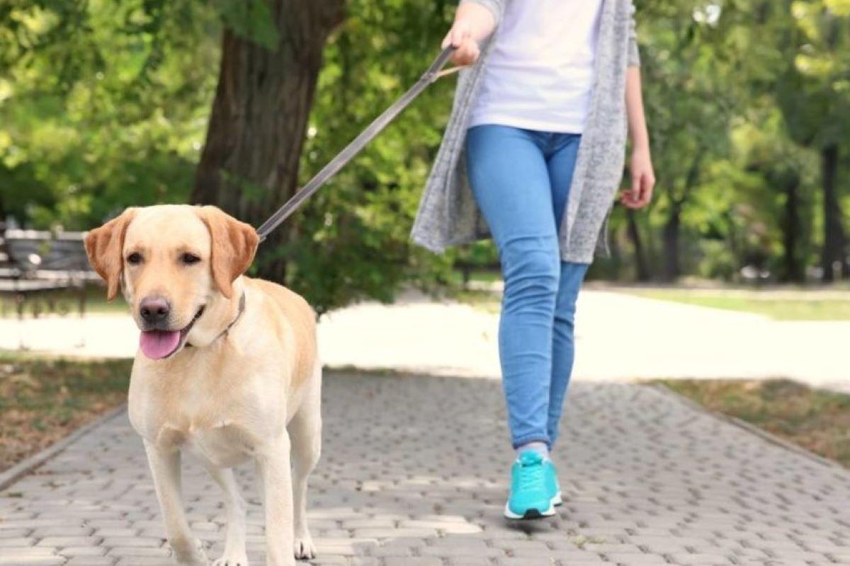 cane e obblighi di legge