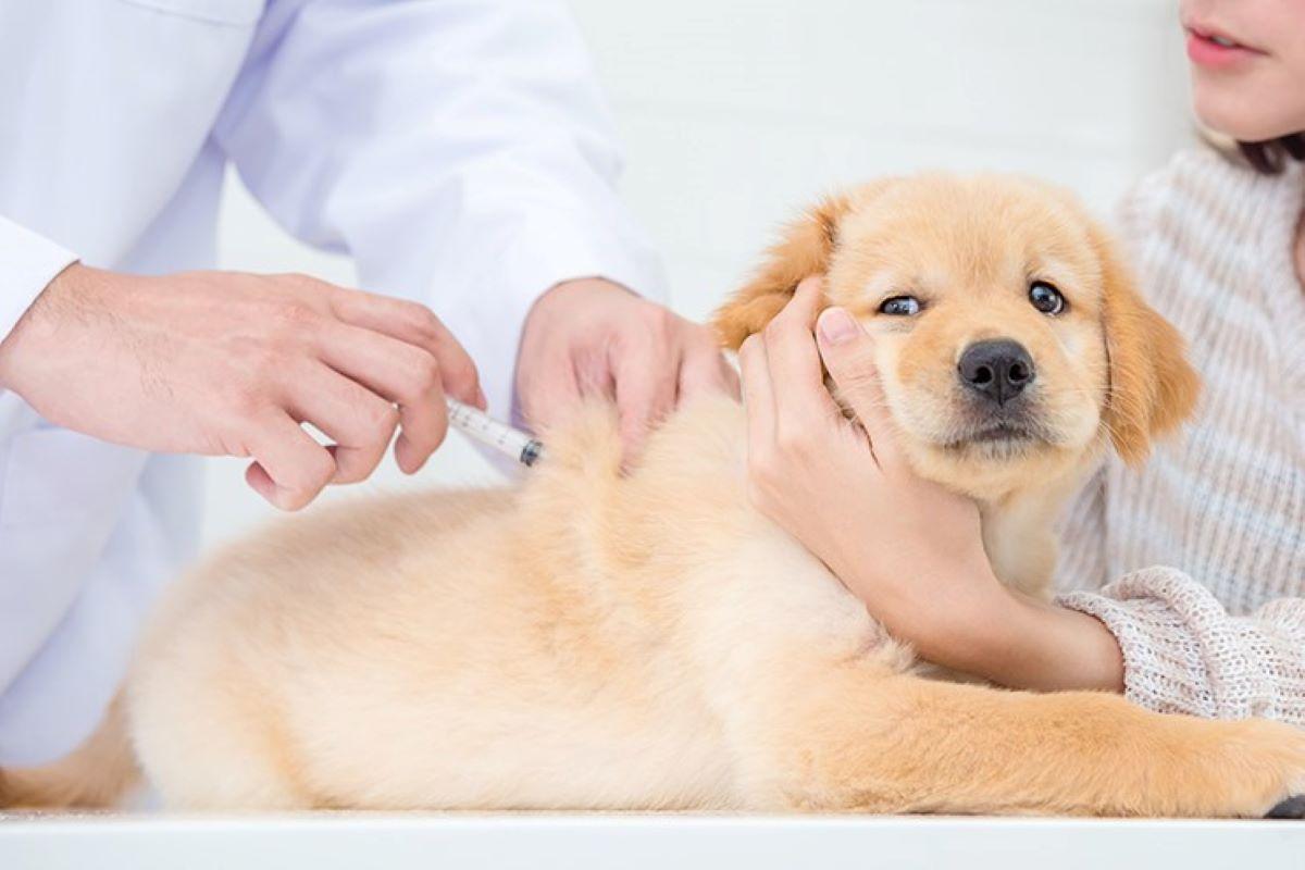 cucciolo e microchip