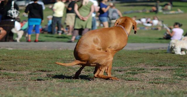 cane fa la cacca in un prato