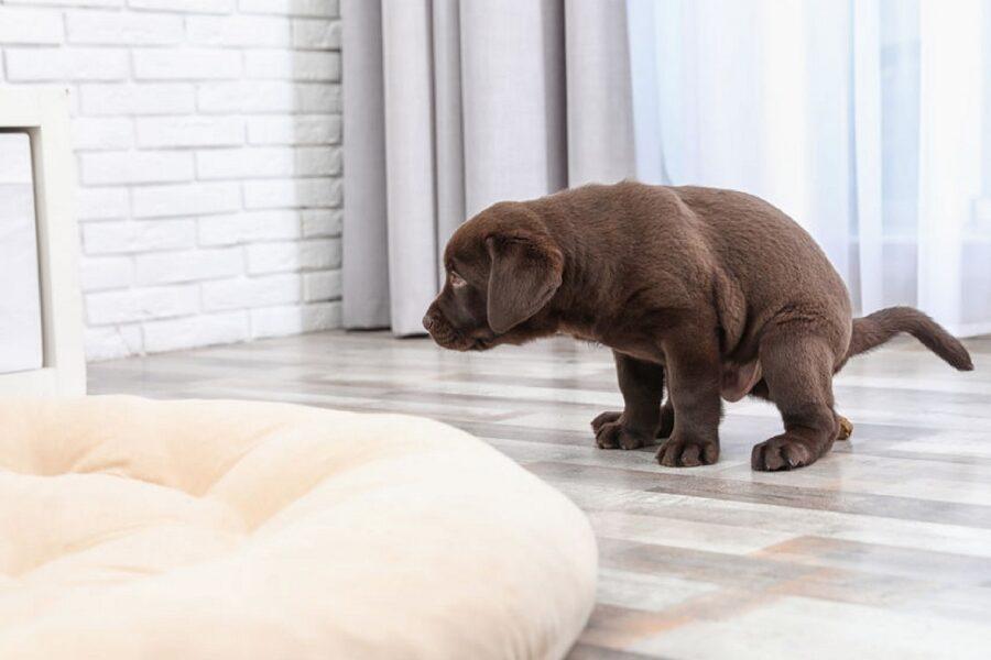 incontinenza fecale del cane
