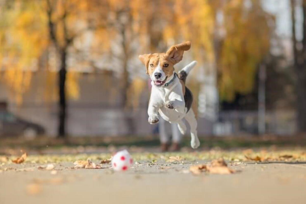 cucciolo con la pallina