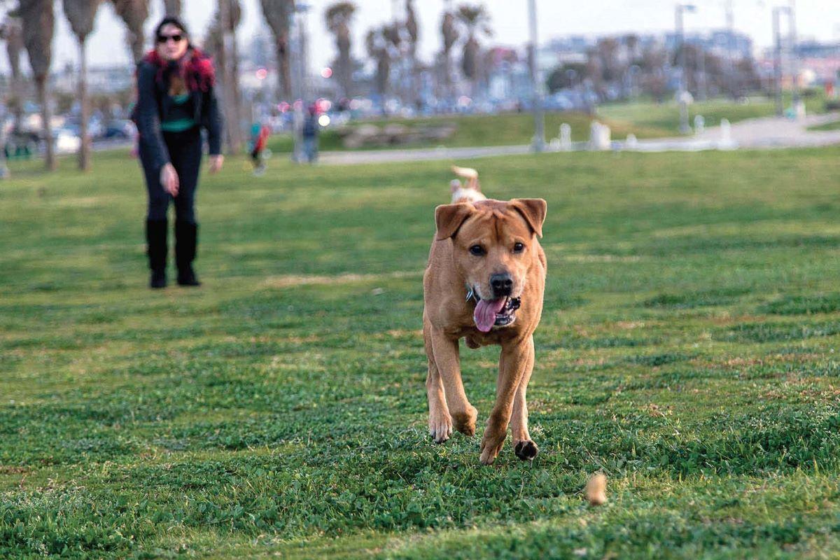 cane gioca da solo corre