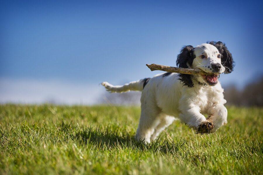 cane che tiene un ramo tra i denti