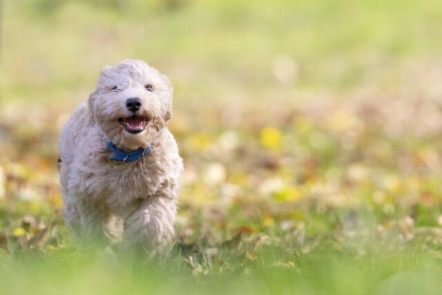 cane su prato verde