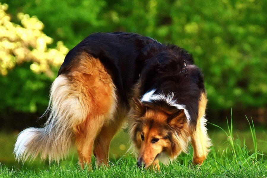cane che odora