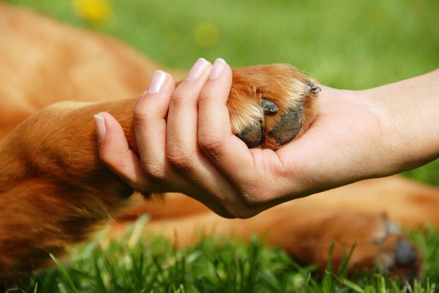 mano e zampa del cane