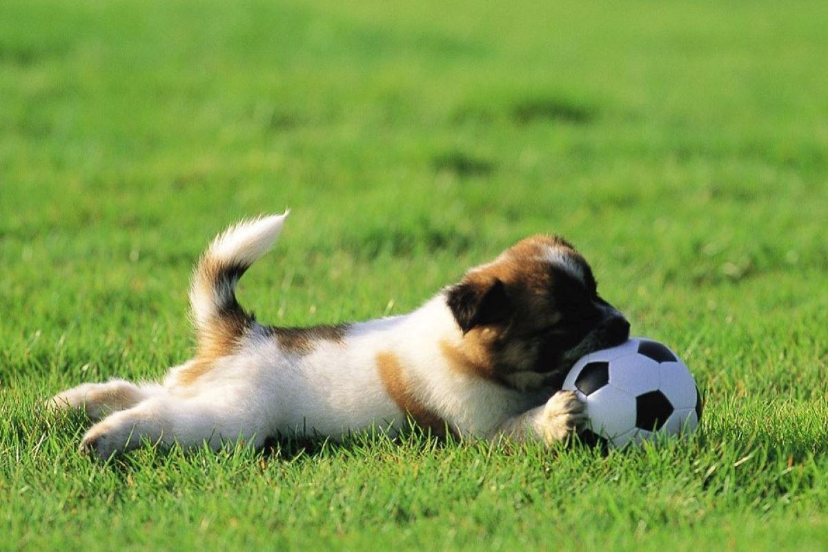 cucciolo gioca a palla