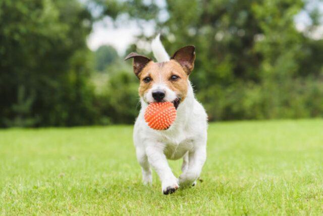 cane lancia tutti gli oggetti