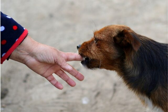 cane morde un dito