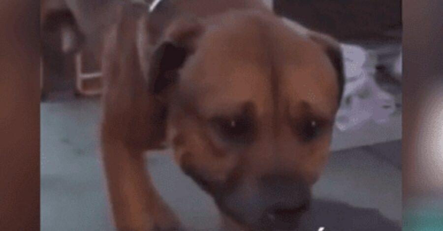 cane disperato perché abbandonato