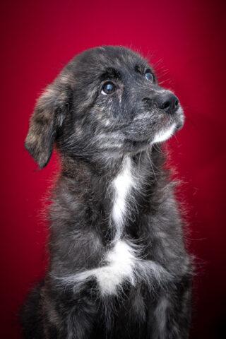 Cane piccolo in adozione