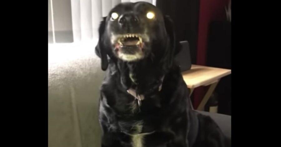 cane arrabbiato mostra i denti