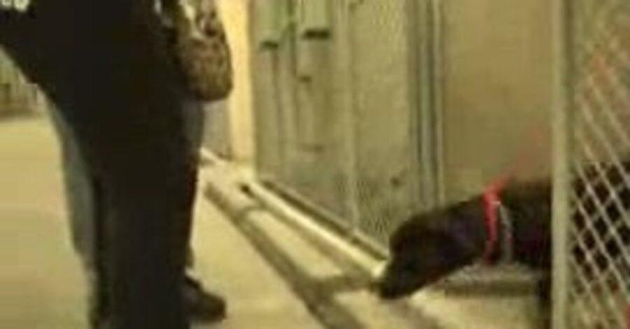 cane esce dalla gabbia
