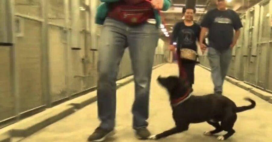 cane felice esce dal canile