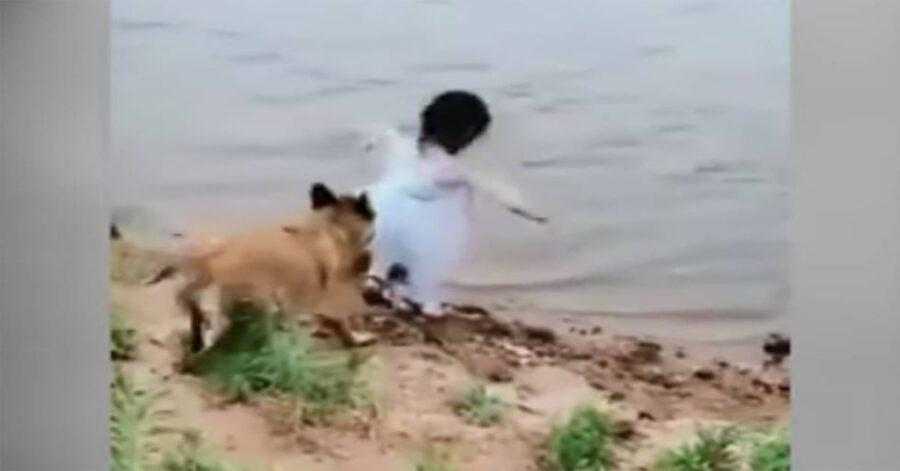 Malinois salva bimba che cade nel fiume