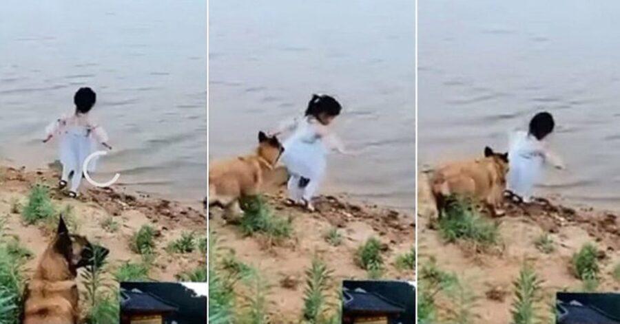 Malinois salva bimba che sta per cadere nel fiume