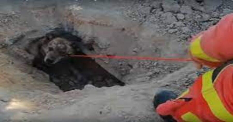 cane tirato fuori da una fogna