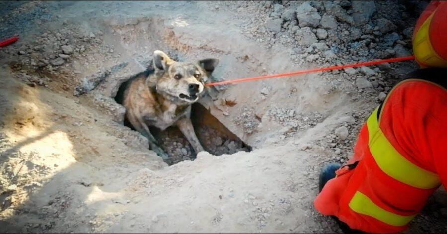 cane intrappolato salvato