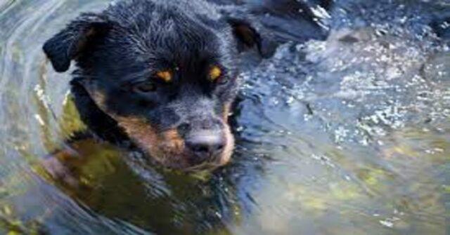 cane nel fiume